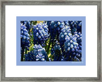 Bluebells Framed Print by Dale   Ford