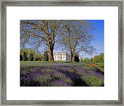 Bluebells In The Pleasure Grounds, Emo Framed Print by The Irish Image Collection