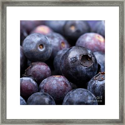 Blueberry Background Framed Print by Jane Rix