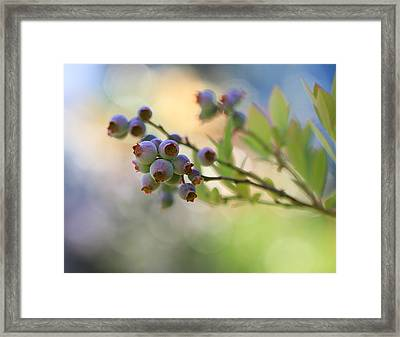 Blueberry Goodness Framed Print by Heidi Smith