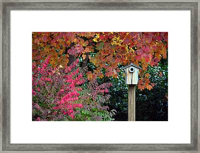 Bluebird House Color Surround Framed Print by Sandi OReilly