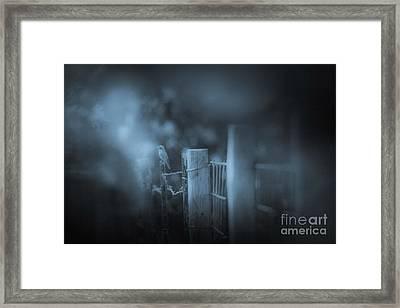 Bluebird Framed Print by Kim Henderson