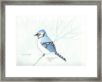 Bluejay Framed Print by William Deering