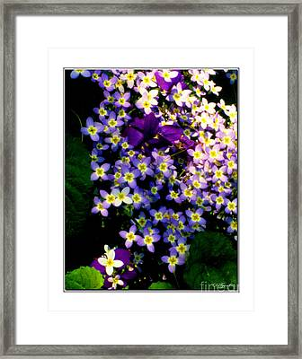 Bluets And Violets Framed Print by Diana  Tyson