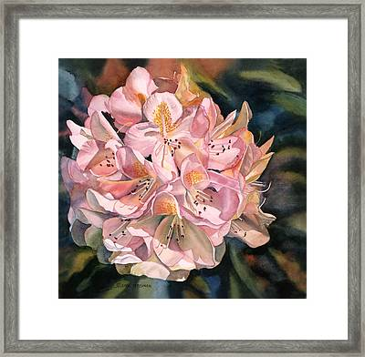 Blushing Pink Rhododendron  Framed Print by Sharon Freeman