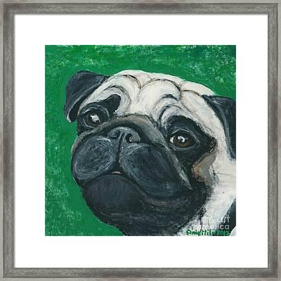 Bo The Pug Framed Print by Ania M Milo