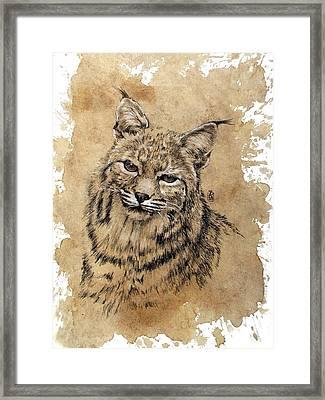 Bobcat Framed Print by Debra Jones