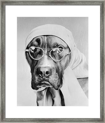 Bohemian Boxer Framed Print by Keystone Features