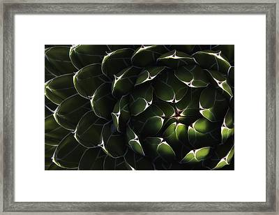 Bolivian Plant In Late Afternoon Light Framed Print by Robert Postma
