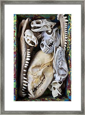 Bone Box Framed Print by Garry Gay