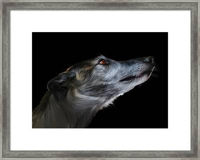 Born For The Run Framed Print by Julie L Hoddinott