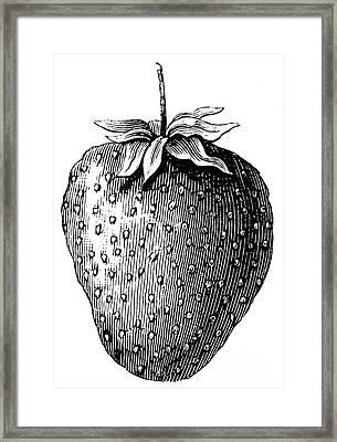 Botany: Strawberry Framed Print by Granger