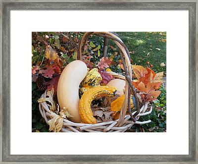 Bounty Framed Print by Tim Donovan
