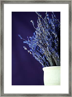 Bouquet Of Lavender Framed Print by HD Connelly