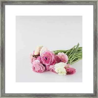 Bouquet Of Ranunculus Framed Print by Elin Enger