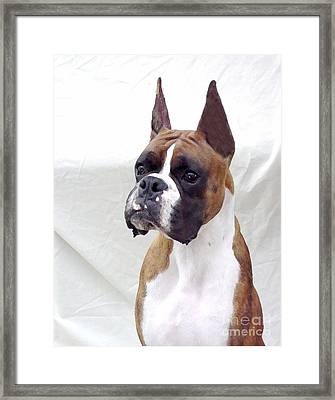 Boxer 140 Framed Print by Larry Matthews