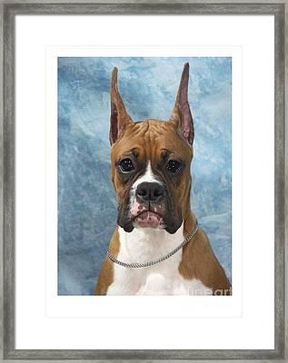 Boxer 155 Framed Print by Larry Matthews