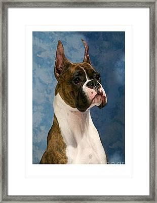 Boxer 456 Framed Print by Larry Matthews
