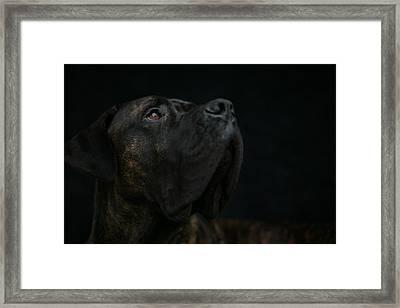 Boxer Dog Looking Up Framed Print by STasker
