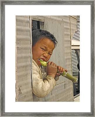 Boy Eating A Sugar Cane Framed Print by Bjorn Svensson