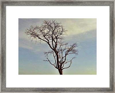 Branch Out Framed Print by Peter P G