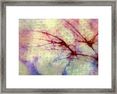 Branches Poised For Takeoff Framed Print by Judi Bagwell