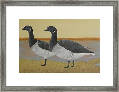 Brant Geese Framed Print by Alan Suliber