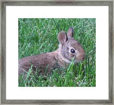 Brave Yard Bunny Framed Print by Donna Cavender