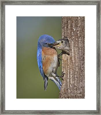 Breakfast Is Now Being Served. Framed Print by Susan Candelario