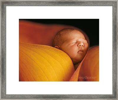 Calla Lily Framed Print featuring the photograph Brian In Calla Lily by Anne Geddes
