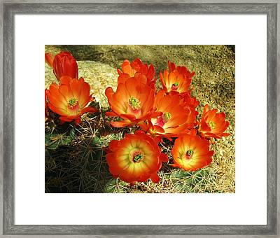 Bright And Beautiful Framed Print by FeVa  Fotos