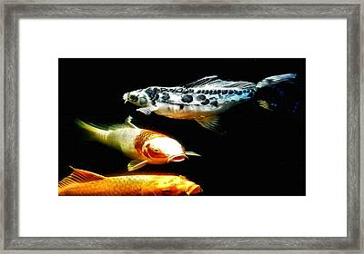 Bright Colored Fish Framed Print by Don Mann