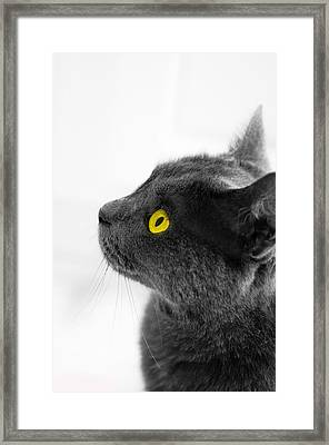 Bright Eyes Framed Print by Vincent  Dale