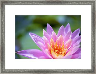 Bright Pink Water Lily II Framed Print by Kicka Witte