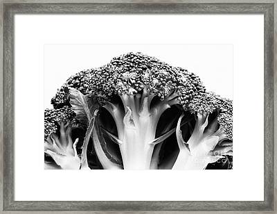 Broccoli On White Background Framed Print by Gaspar Avila