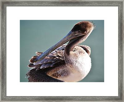 Browm Pelican Up Close Framed Print by Paulette Thomas