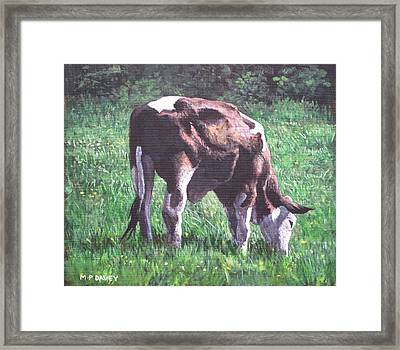 Brown And White Cow Eating Grass Framed Print by Martin Davey