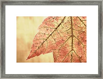 Brown Autumn Framed Print by Carol Leigh