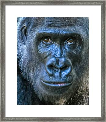 Brown Eyes Framed Print by Brian Stevens