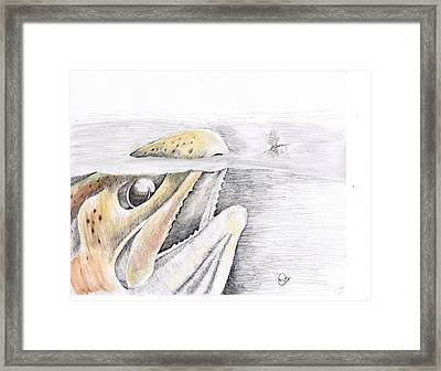 Brown Trout  Framed Print by H C Denney