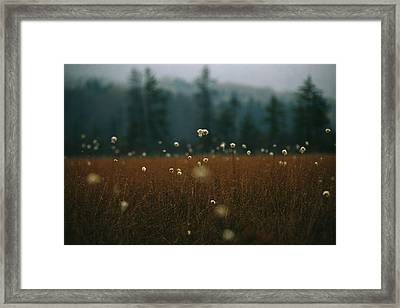 Browned Autumn Field Of Cotton Grass Framed Print by Raymond Gehman