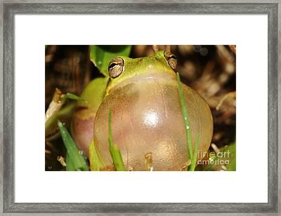 Bubbleicious Framed Print by Lynda Dawson-Youngclaus