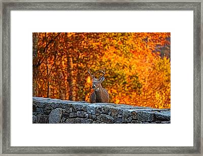 Buck Digital Painting - 01 Framed Print by Metro DC Photography