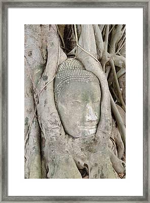 Buddha Head In A Tree Framed Print by Kanoksak Detboon