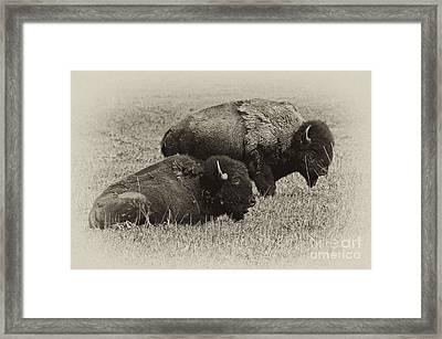 Buffalo Framed Print by Wilma  Birdwell