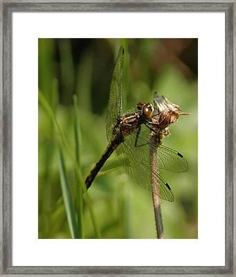 Bug Eyed Dragon Fly Framed Print by LeeAnn McLaneGoetz McLaneGoetzStudioLLCcom