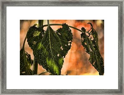 Buggilicious Framed Print by Bonnie Bruno