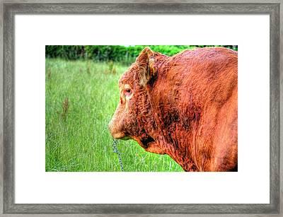 Bull Framed Print by Barry R Jones Jr