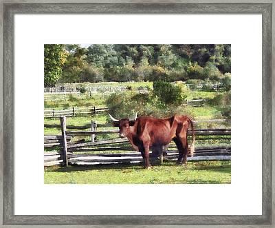 Bull In Pasture Framed Print by Susan Savad