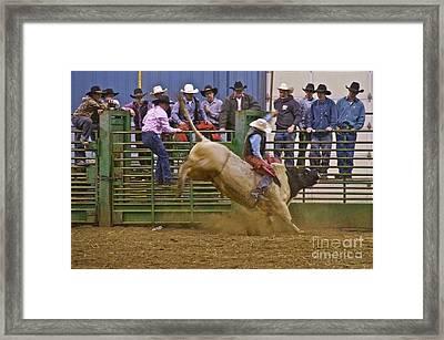 Bull Rider 2 Framed Print by Sean Griffin